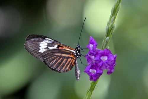 Butterfly World _006 .jpg