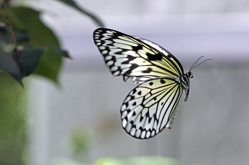 Butterfly World _011 .jpg