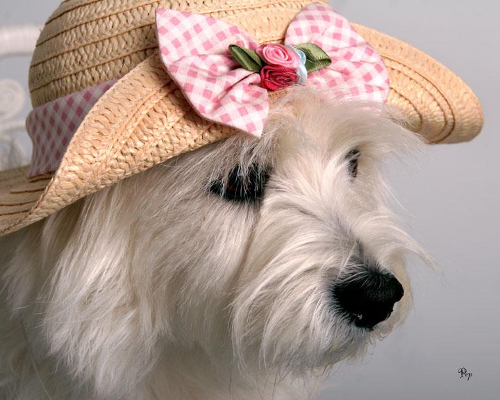 Feb. 27, 2006 - Spring Hat