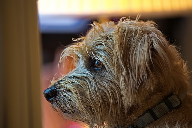Murphy Portrait
