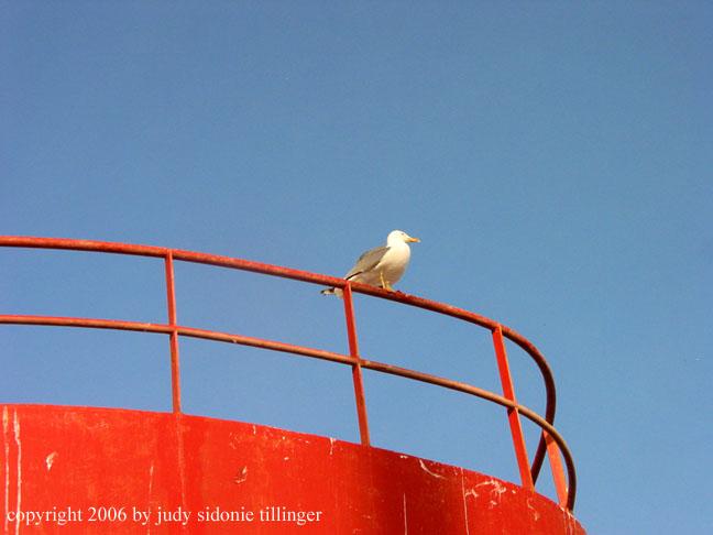 gull, Essaouira