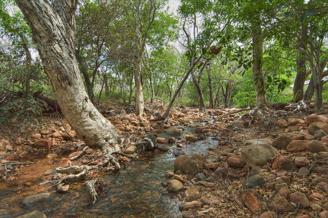 Temporary oasis in the savanna _DSC3337