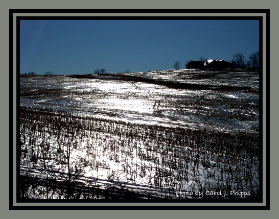 Maryland hillside, icy! (USA)