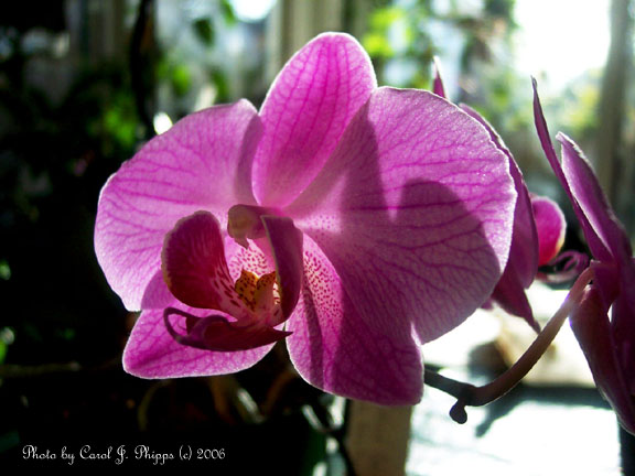 Phal Brother Girl Pink Festival.
