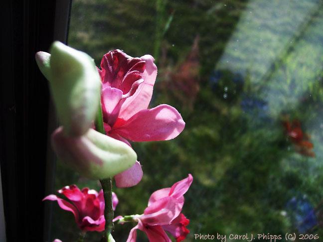 Light Through a Western Window.JPG