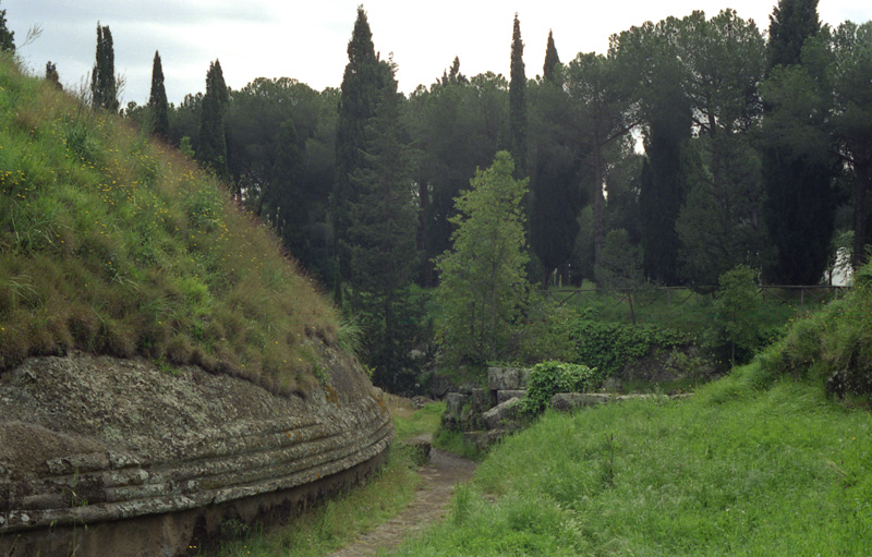 Poplars near burial mound