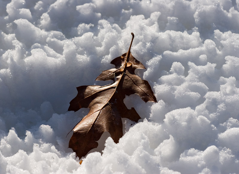Granular Snow