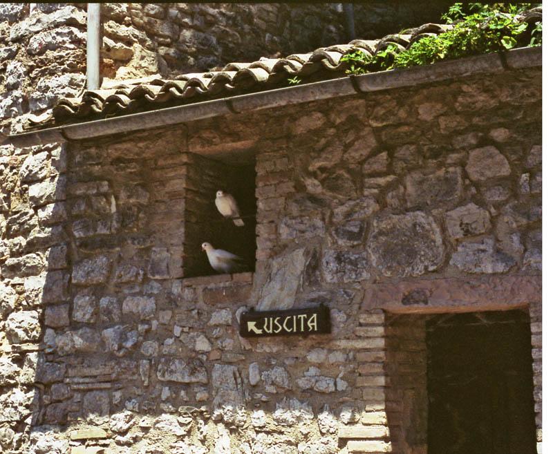 Hermitage doves
