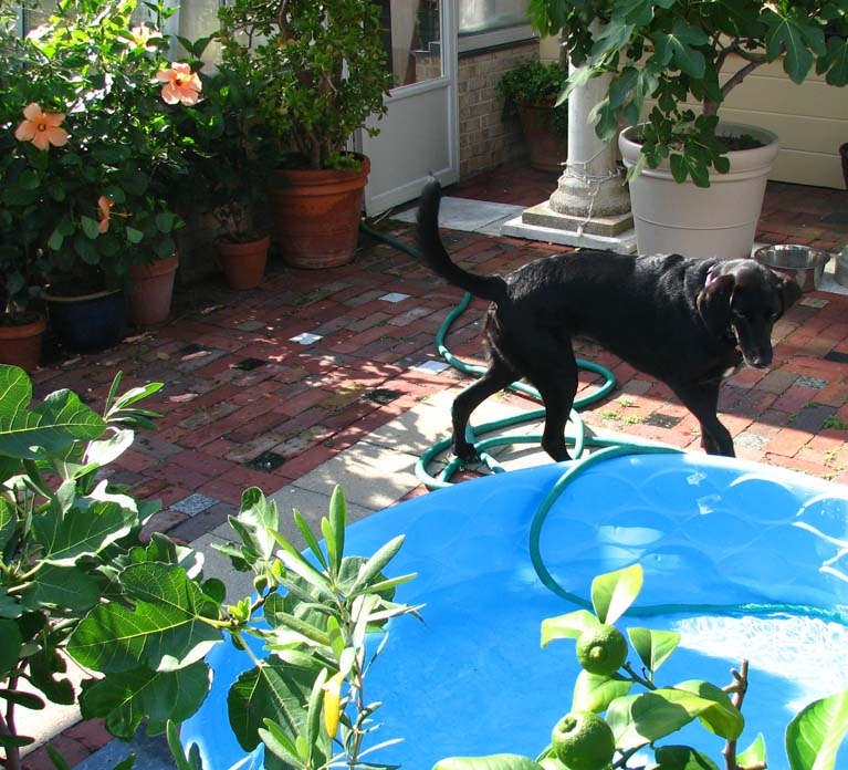 Lexie and the swimming pool