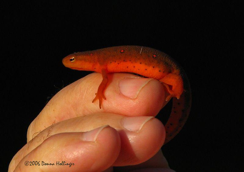 Red eft and Rics finger