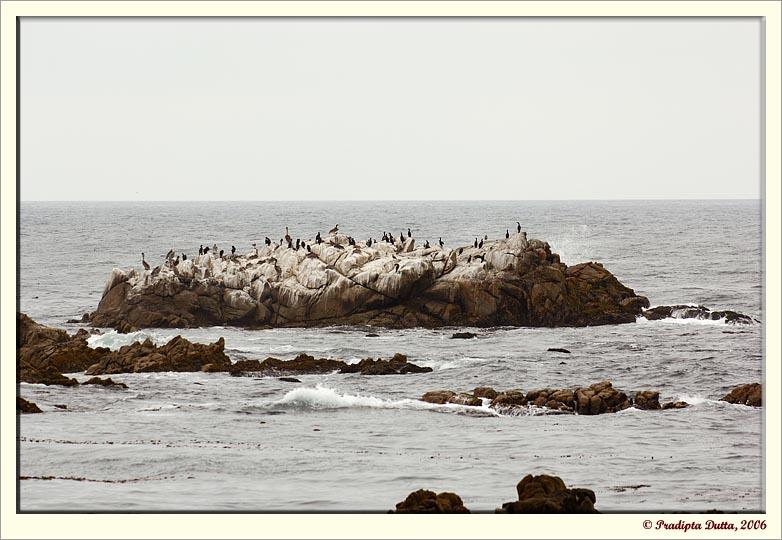 Rocks & birds