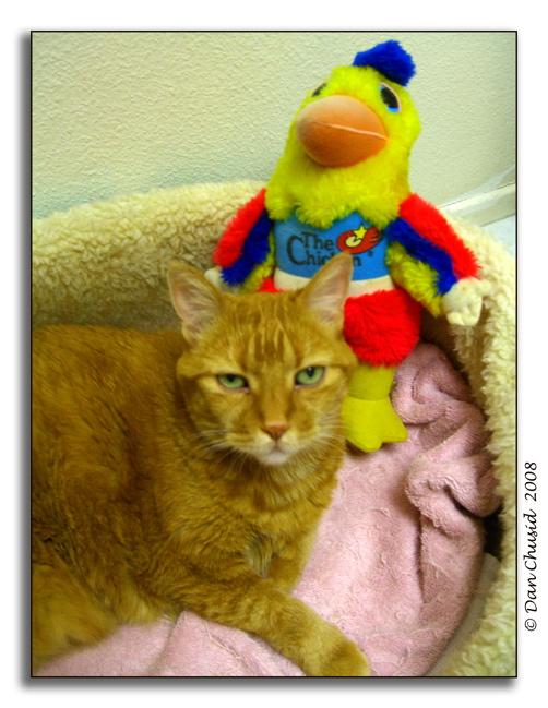 Cat & Chicken