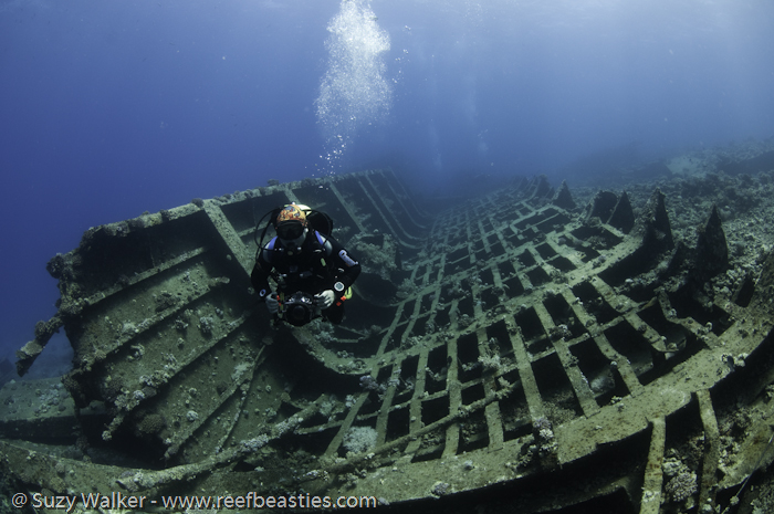 Ghiannis D Wreck back section