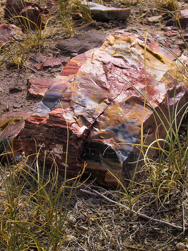01-08 Petrified Forest 3.jpg