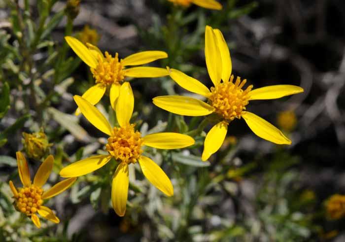 California Poppy Reserve