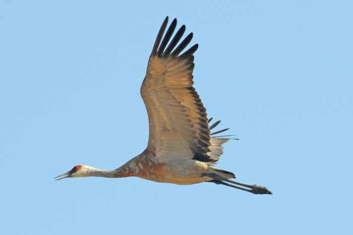 grace in flight