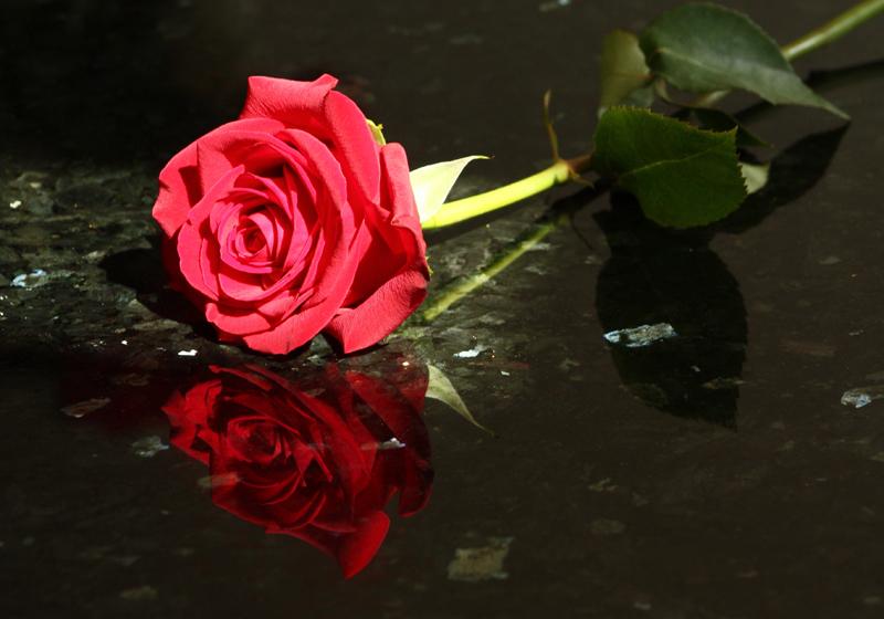 Rose Reflection.jpg