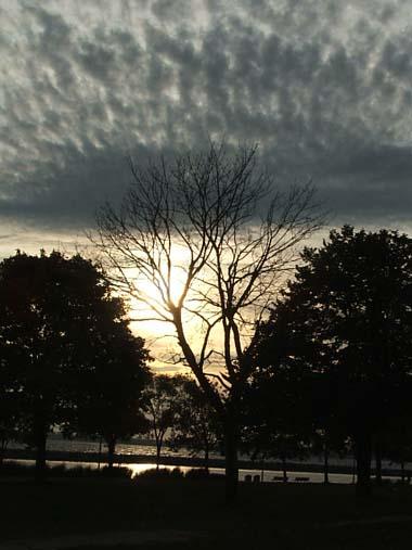 limbs and sky