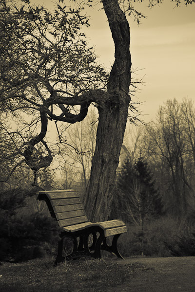 Banc dans le parc_Bench in the park