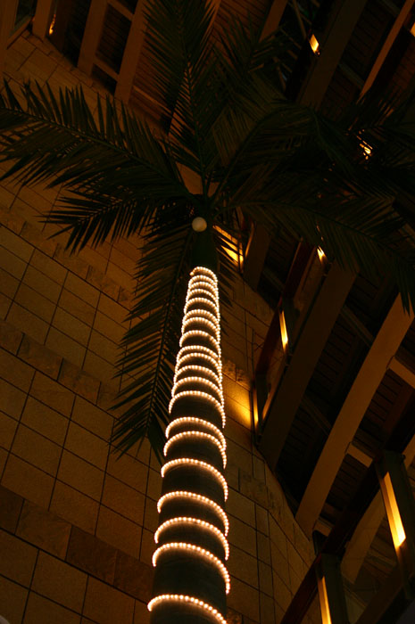 Light palmtree