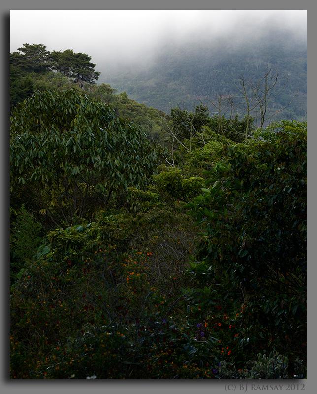 The view from Orquideas del Valle Bosque de Niebla