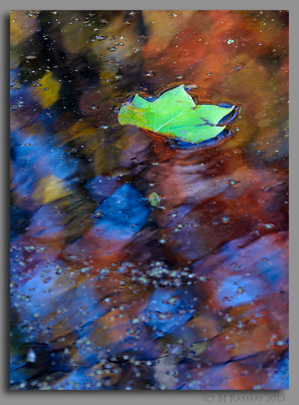 Reflections on a Leaf