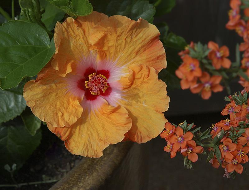 Botanical Gardens_008.jpg