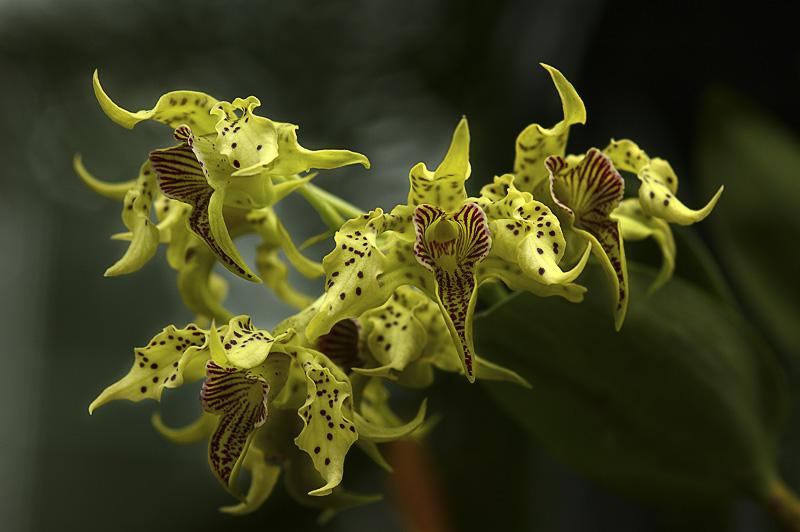 Orchid Class_023.jpg