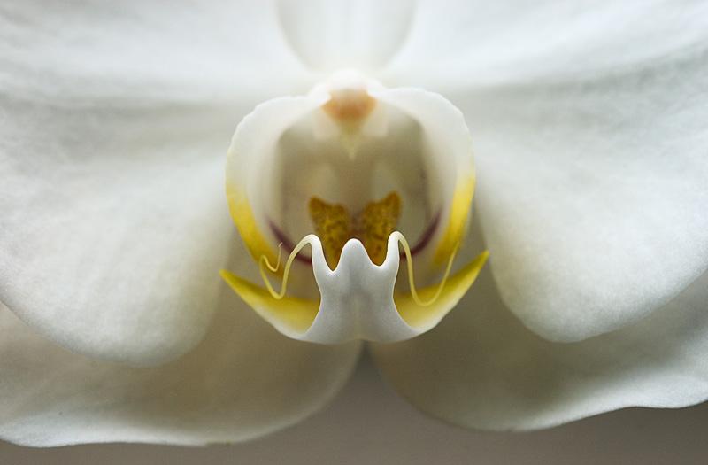 Orchid Class_017.jpg