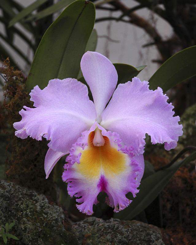Orchid Class_031.jpg