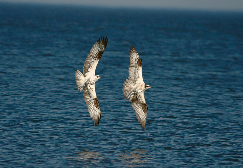 Pax Osprey_005.jpg