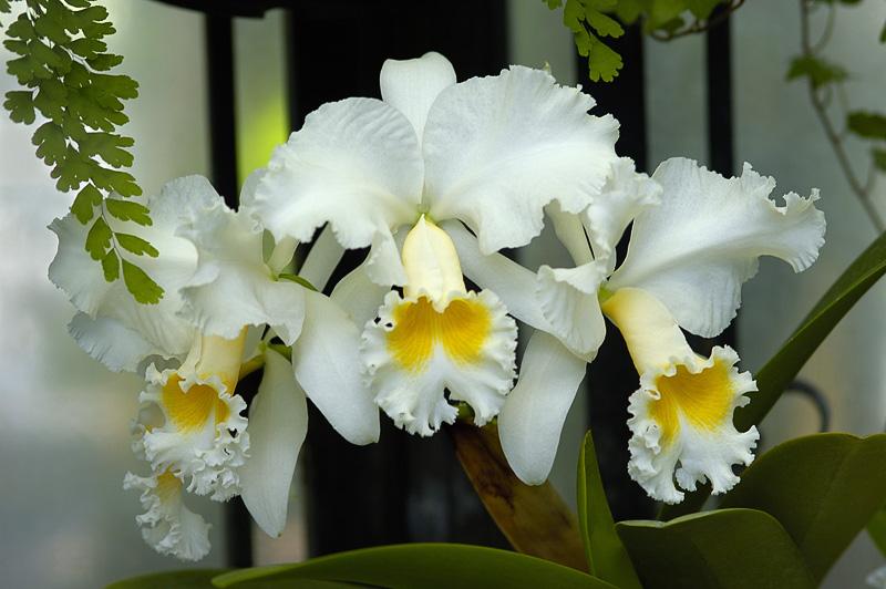 Longwood Orchids_002.jpg
