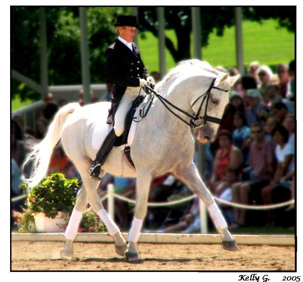 Lippizaner Stallion