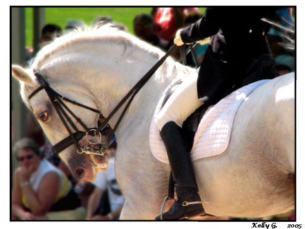 Lippy Stallion