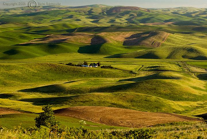 Lines and Shapes of the Palouse