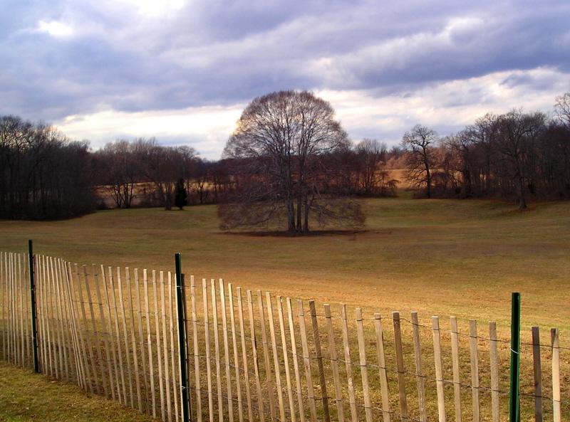 An ancient tree in Caumsett Park