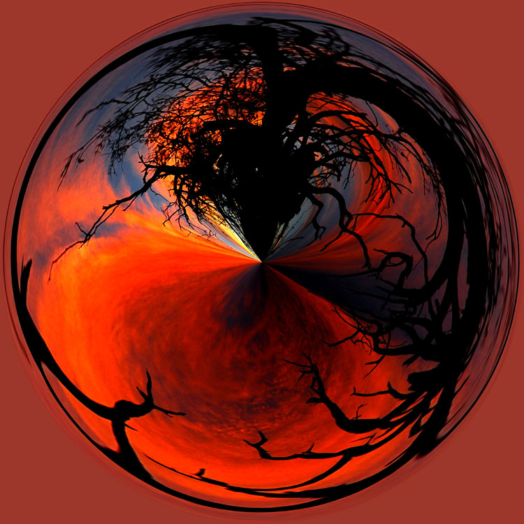 Sunset and Scraggy Tree Circle