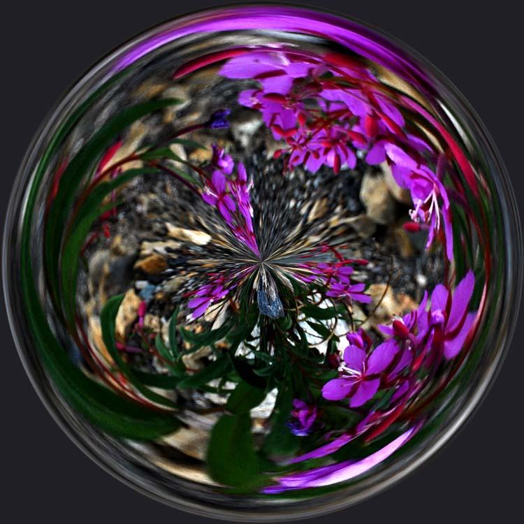 Purple Desert Flower Fun