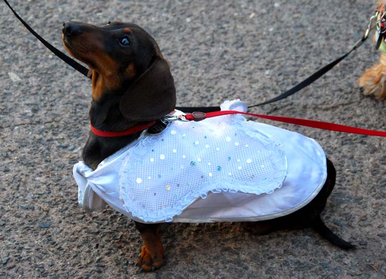 Angel Doxie