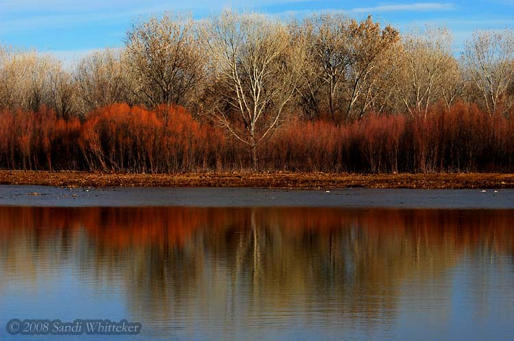 Just the Bosque