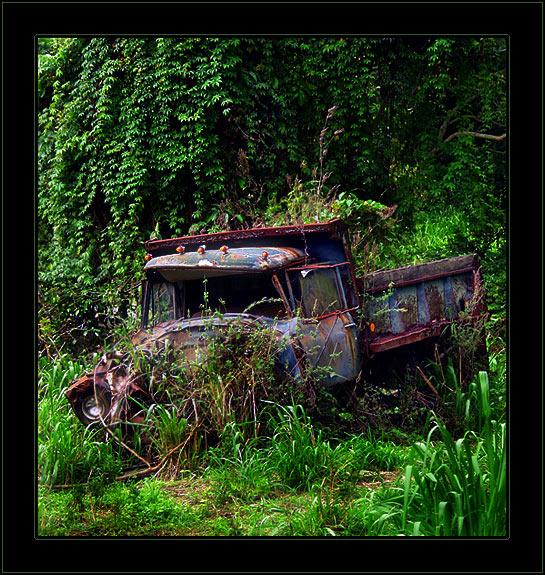Jungle Cascade Truck