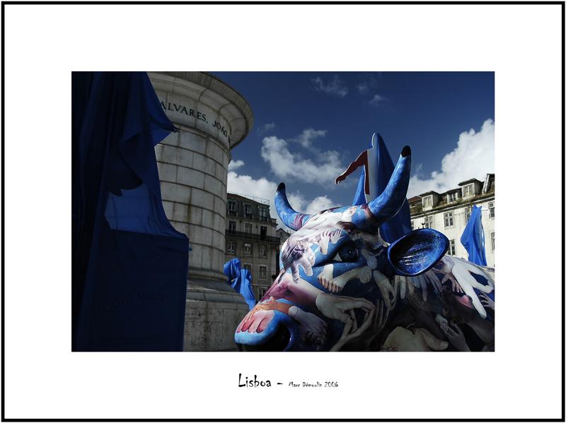 Cows in Lisboa 2