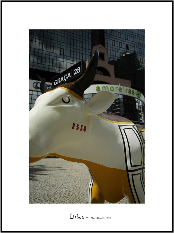 Cows in Lisboa 3