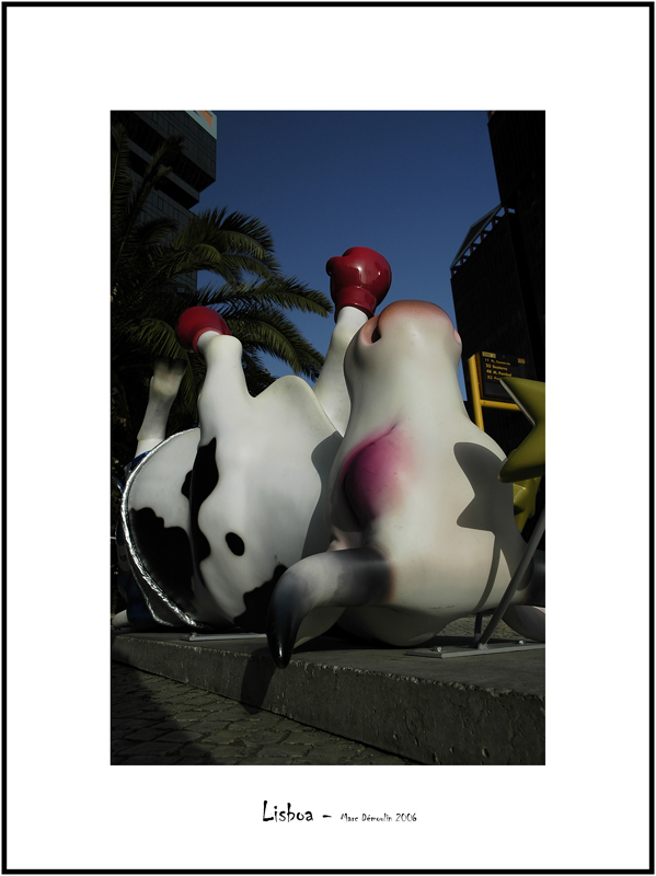 Cows in Lisboa 5