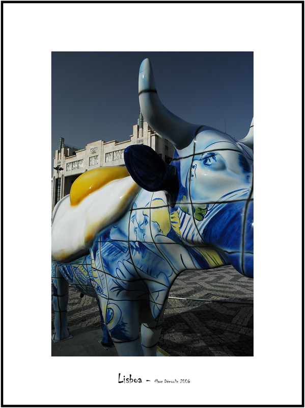 Cows in Lisboa 9