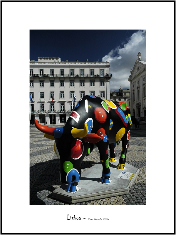 Cows in Lisboa 10