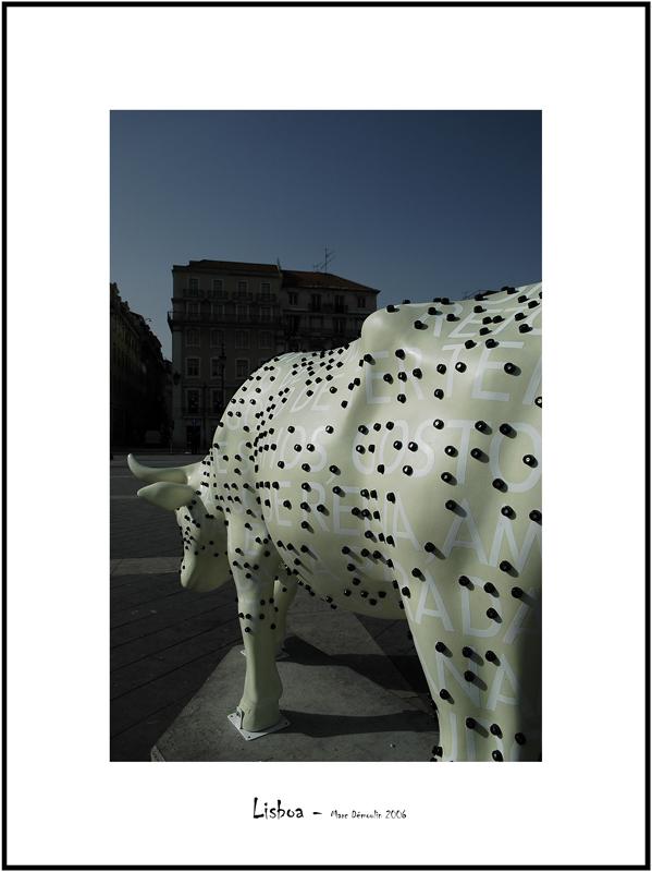 Cows in Lisboa 11