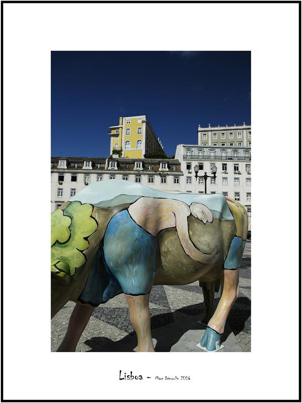 Cows in Lisboa 13