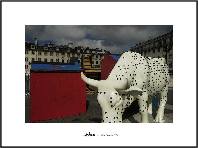 Cows in Lisboa 15