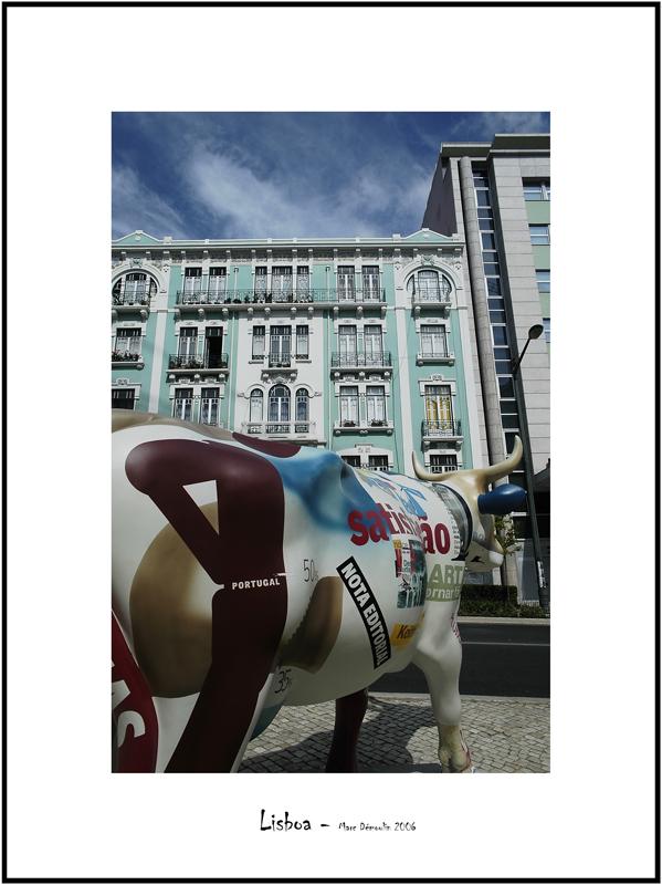 Cows in Lisboa 22